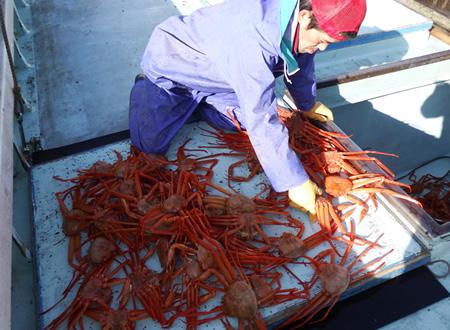 (2)鮮度が一番!蟹キング漁師が蟹を採る